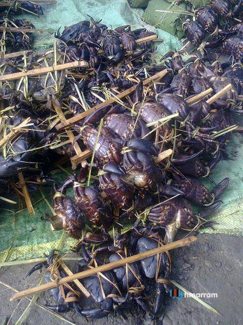 Ai (Crabs)