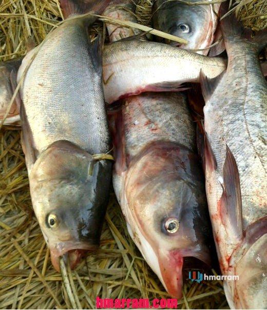 Vadung nga (Fresh river fish)