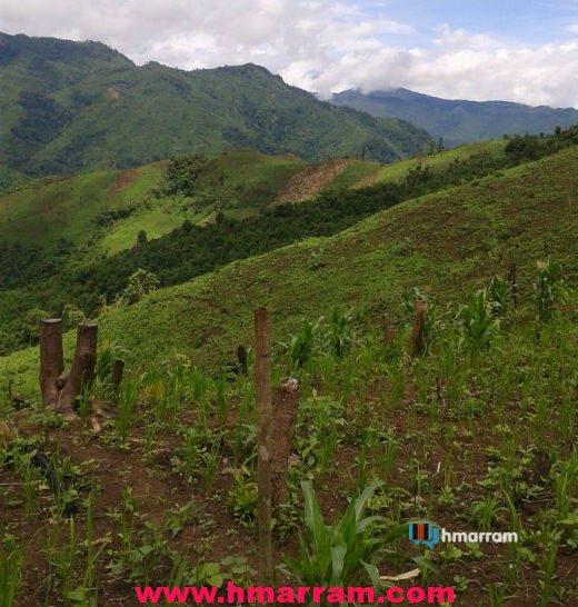 Jhum field in Hmar Hills